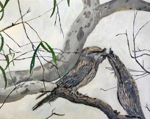 Tawny Frogmouths 2020 oil on linen 76 x61 cm